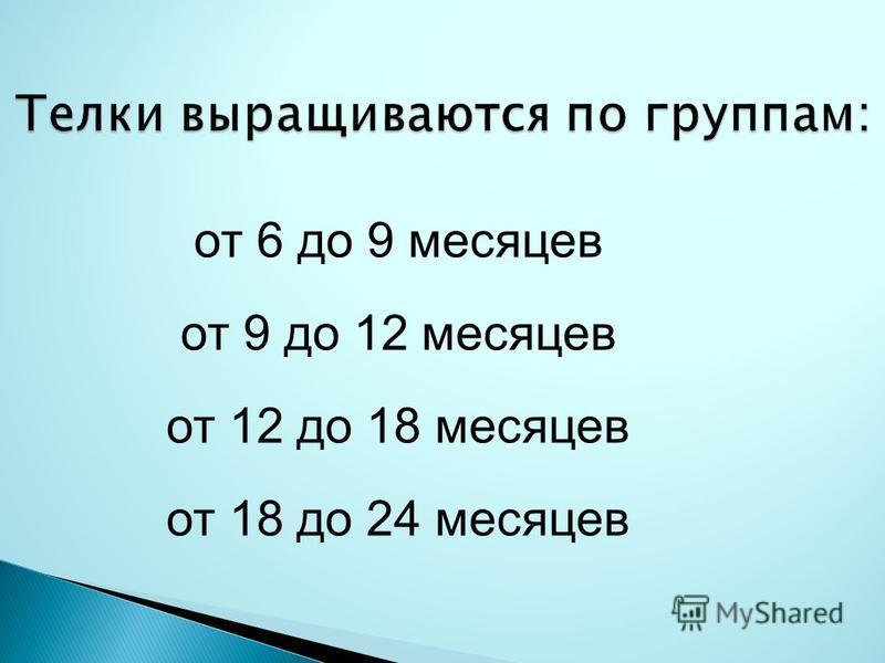Телки выращиваются по группам: от 6 до 9 месяцев от 9 до 12 месяцев от 12 до 18 месяцев от 18 до 24 месяцев
