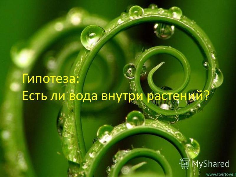 Гипотеза: Есть ли вода внутри растений?