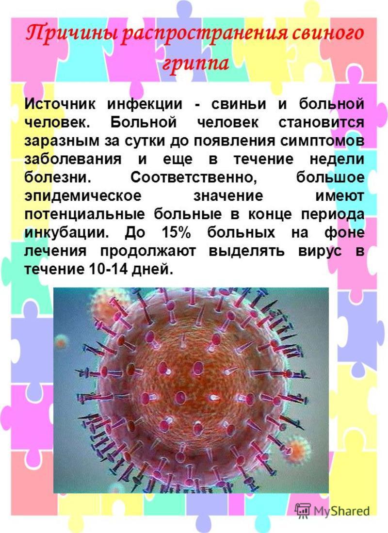 Причины распространения свиного гриппа Источник инфекции - свиньи и больной человек. Больной человек становится заразным за сутки до появления симптомов заболевания и еще в течение недели болезни. Соответственно, большое эпидемическое значение имеют