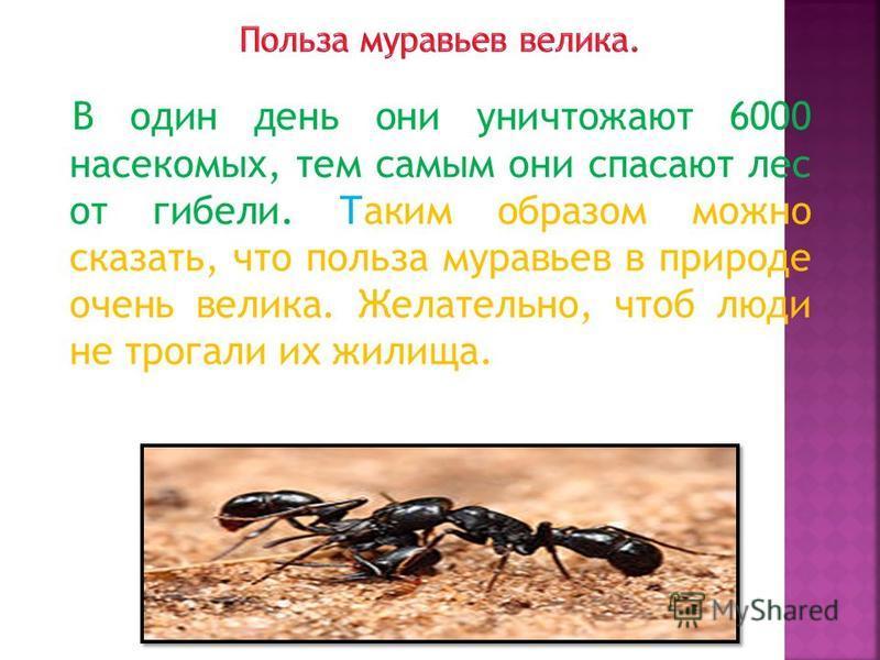 В один день они уничтожают 6000 насекомых, тем самым они спасают лес от гибели. Таким образом можно сказать, что польза муравьев в природе очень велика. Желательно, чтоб люди не трогали их жилища.