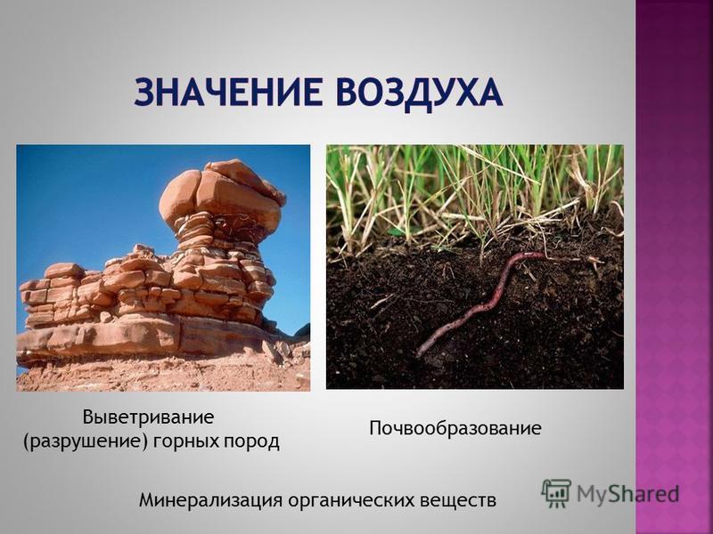 Выветривание (разрушение) горных пород Почвообразование Минерализация органических веществ