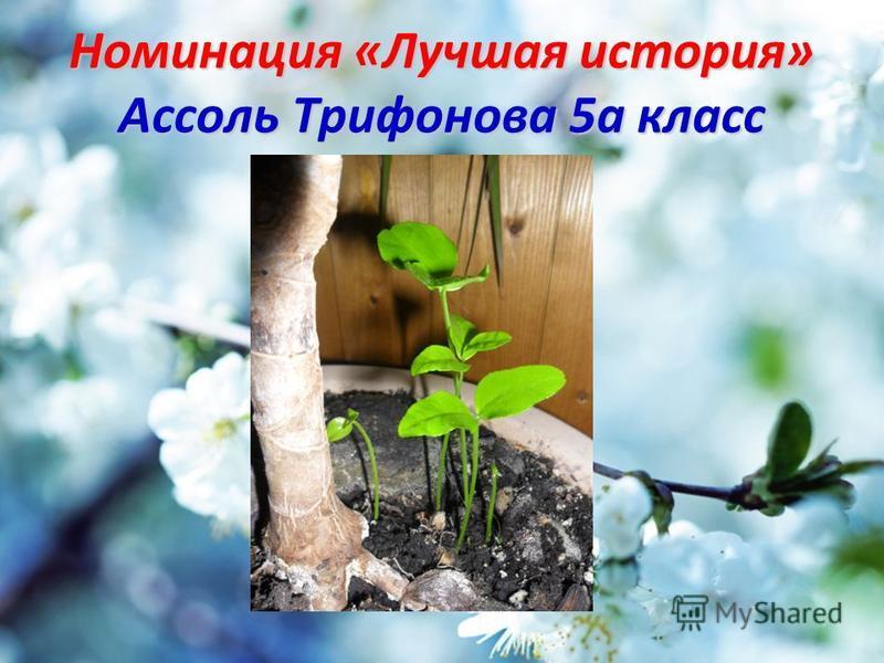 Номинация «Лучшая история» Ассоль Трифонова 5 а класс