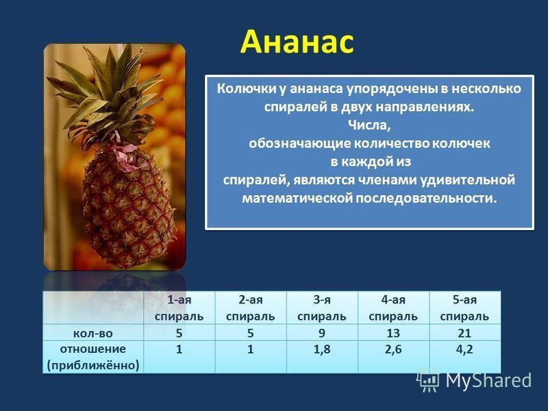 Ананас Колючки у ананаса упорядочены в несколько спиралей в двух направлениях. Числа, обозначающие количество колючек в каждой из спиралей, являются членами удивительной математической последовательности. Колючки у ананаса упорядочены в несколько спи