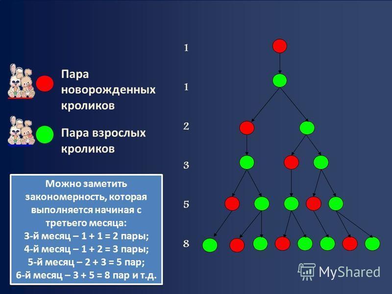 112358112358 Пара новорожденных кроликов Пара взрослых кроликов Можно заметить закономерность, которая выполняется начиная с третьего месяца: 3-й месяц – 1 + 1 = 2 пары; 4-й месяц – 1 + 2 = 3 пары; 5-й месяц – 2 + 3 = 5 пар; 6-й месяц – 3 + 5 = 8 пар