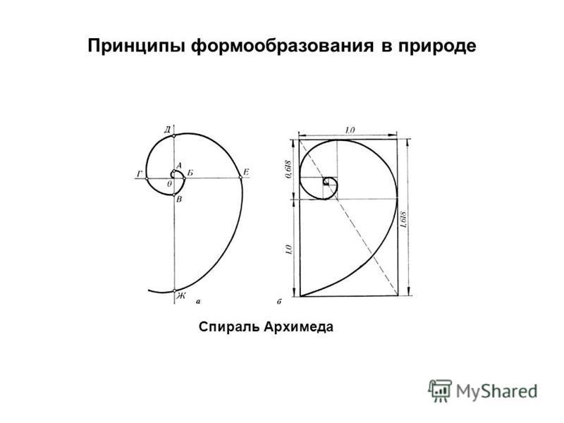 Принципы формообразования в природе Спираль Архимеда