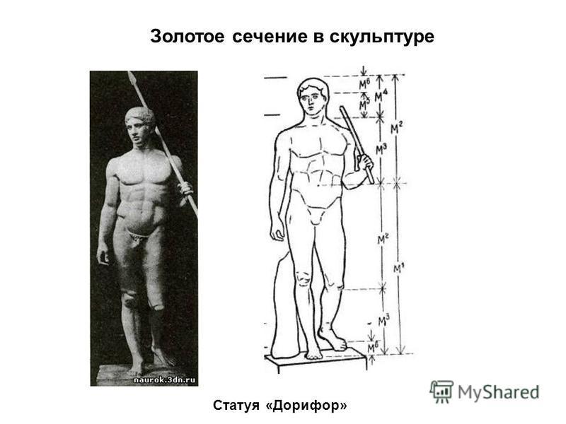 Золотое сечение в скульптуре Статуя «Дорифор»
