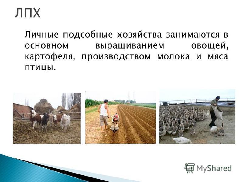 Личные подсобные хозяйства занимаются в основном выращиванием овощей, картофеля, производством молока и мяса птицы.