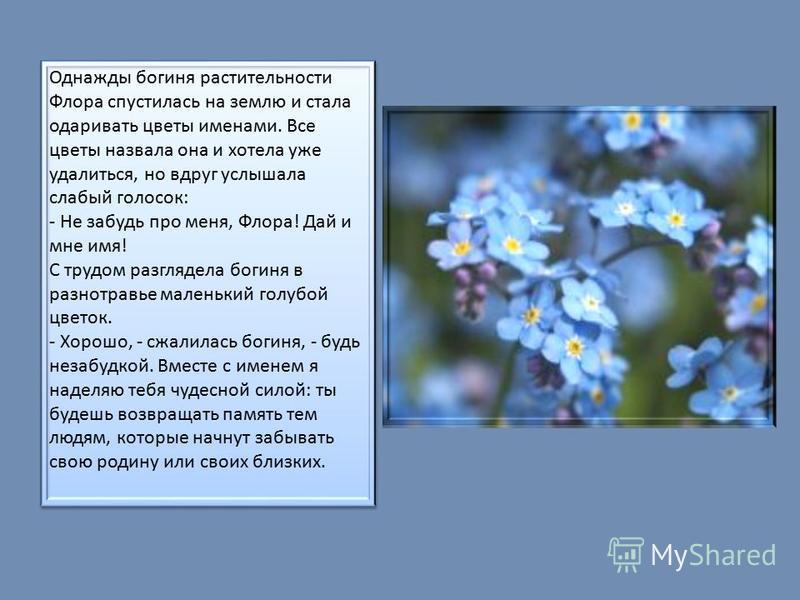 Однажды богиня растительности Флора спустилась на землю и стала одаривать цветы именами. Все цветы назвала она и хотела уже удалиться, но вдруг услышала слабый голосок: - Не забудь про меня, Флора! Дай и мне имя! С трудом разглядела богиня в разнотра