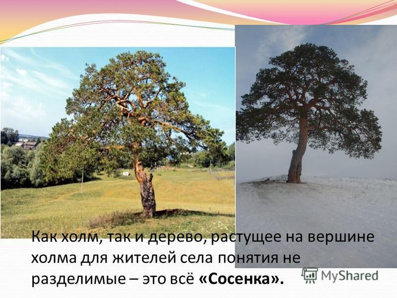 Как холм, так и дерево, растущее на вершине холма для жителей села понятия не разделимые – это всё «Сосенка».