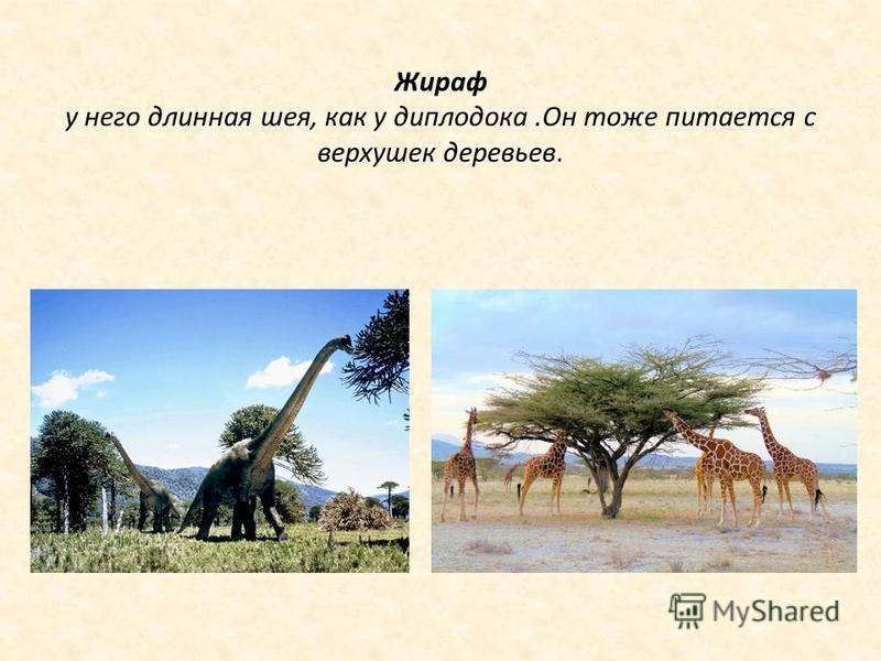 Жираф у него длинная шея, как у диплодока.Он тоже питается с верхушек деревьев.