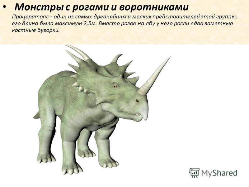 Монстры с рогами и воротниками Процератопс - один из самых древнейших и мелких представителей этой группы: его длина была максимум 2,5 м. Вместо рогов на лбу у него росли едва заметные костные бугорки.