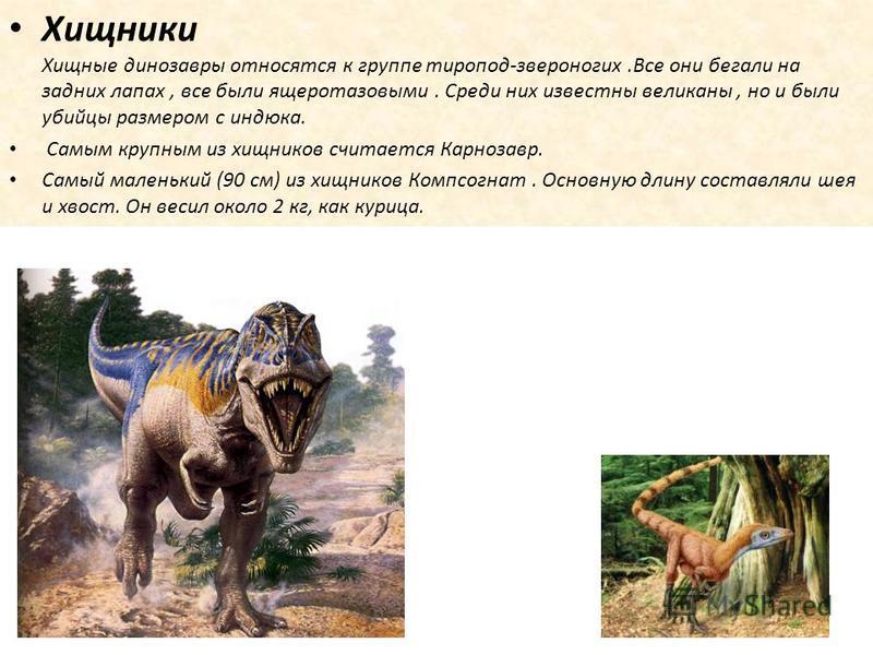 Хищники Хищные динозавры относятся к группе тиропод-звероногих.Все они бегали на задних лапах, все были ящеротазовыми. Среди них известны великаны, но и были убийцы размером с индюка. Самым крупным из хищников считается Карнозавр. Самый маленький (90