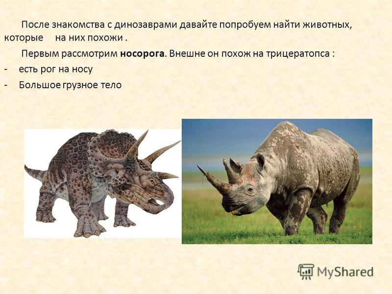 После знакомства с динозаврами давайте попробуем найти животных, которые на них похожи. Первым рассмотрим носорога. Внешне он похож на трицератопса : -есть рог на носу -Большое грузное тело