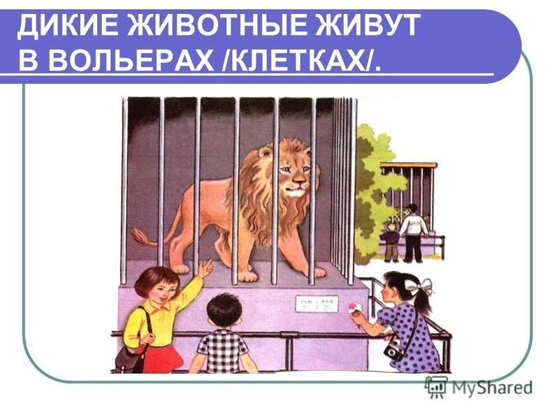 ДИКИЕ ЖИВОТНЫЕ ЖИВУТ В ВОЛЬЕРАХ /КЛЕТКАХ/.