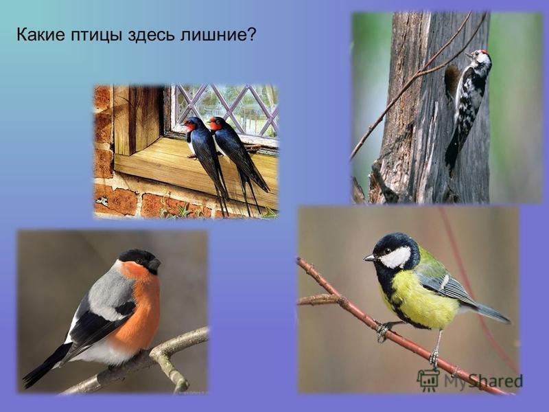 Какие птицы здесь лишние?