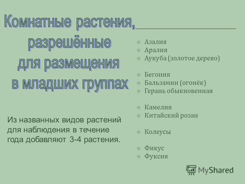 Азалия Аралия Аукуба (золотое дерево) Бегония Бальзамин (огонёк) Герань обыкновенная Камелия Китайский розан Колеусы Фикус Фуксия Из названных видов растений для наблюдения в течение года добавляют 3-4 растения.
