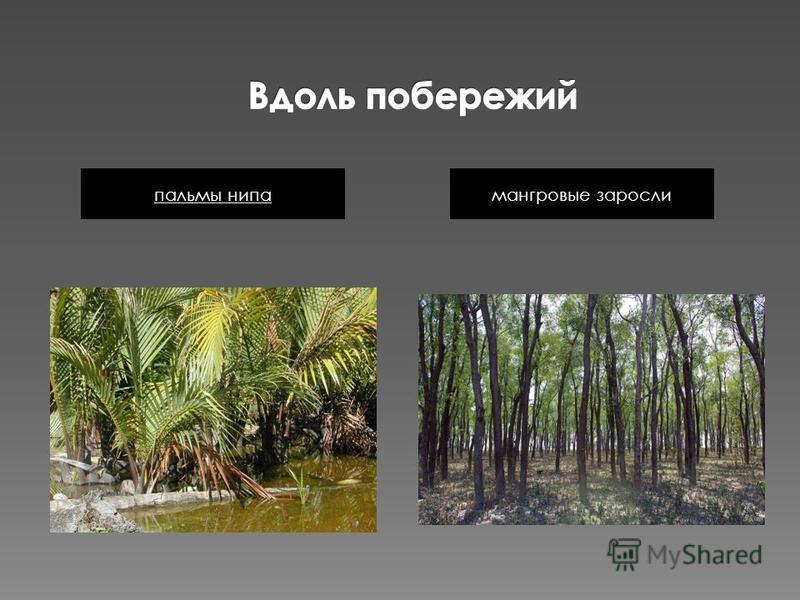 мангровые заросли пальмы нэпа