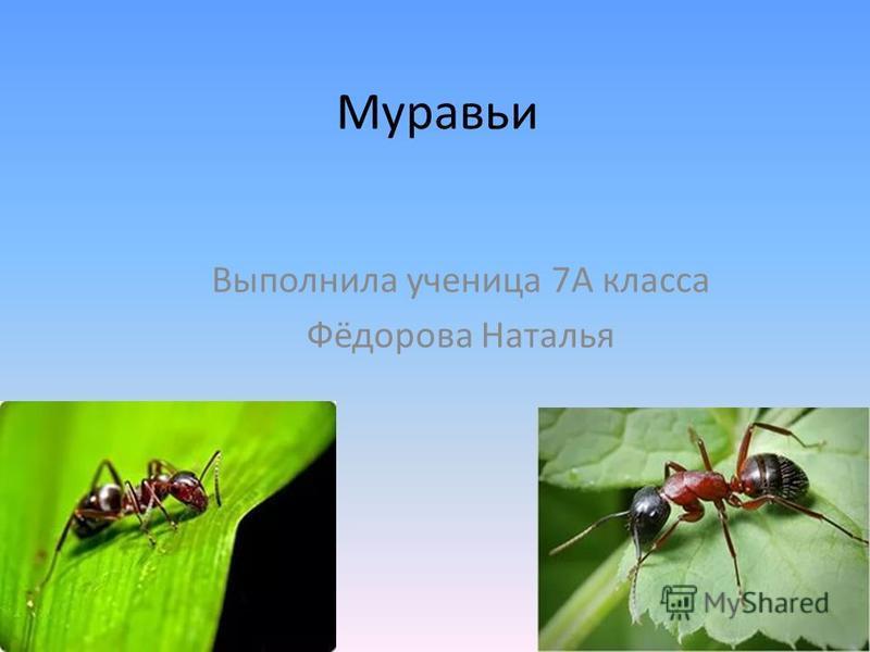 Муравьи Выполнила ученица 7А класса Фёдорова Наталья