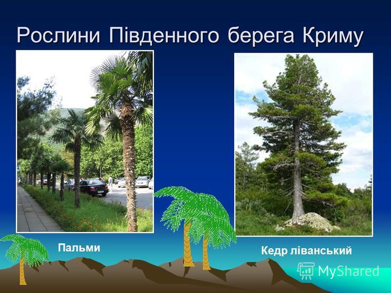 Рослини Південного берега Криму Пальми Кедр ліванський