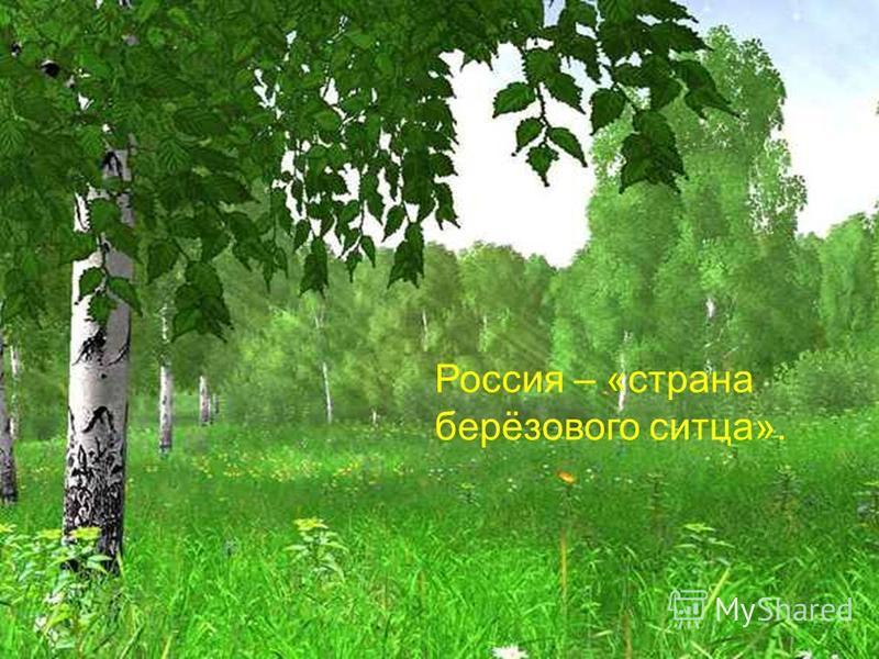 Россия – «страна берёзового ситца».