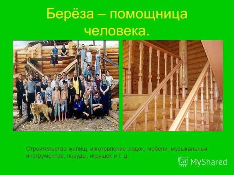 Берёза – помощница человека. Строительство жилищ, изготовление лодок, мебели, музыкальных инструментов, посуды, игрушек и т. д.
