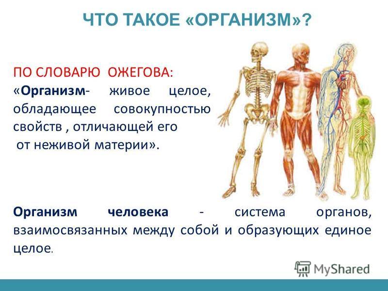 ПО СЛОВАРЮ ОЖЕГОВА: «Организм- живое целое, обладающее совокупностью свойств, отличающей его от неживой материи». Организм человека - система органов, взаимосвязанных между собой и образующих единое целое. ЧТО ТАКОЕ «ОРГАНИЗМ»?
