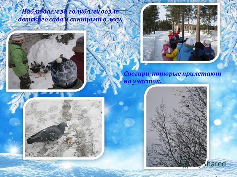Наблюдаем за голубями возле детского сада и синицами в лесу. Снегири, которые прилетают на участок.
