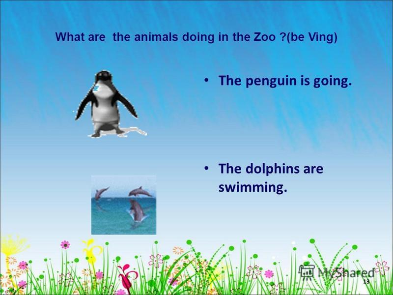 13 What are the animals doing in the Zoo ?(be Ving) The penguin is going. The dolphins are swimming.