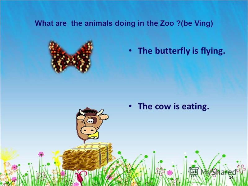 14 What are the animals doing in the Zoo ?(be Ving) The butterfly is flying. The cow is eating.