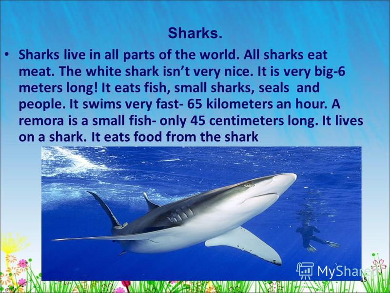 15 Sharks. Sharks live in all parts of the world. All sharks eat meat. The white shark isnt very nice. It is very big-6 meters long! It eats fish, small sharks, seals and people. It swims very fast- 65 kilometers an hour. A remora is a small fish- on