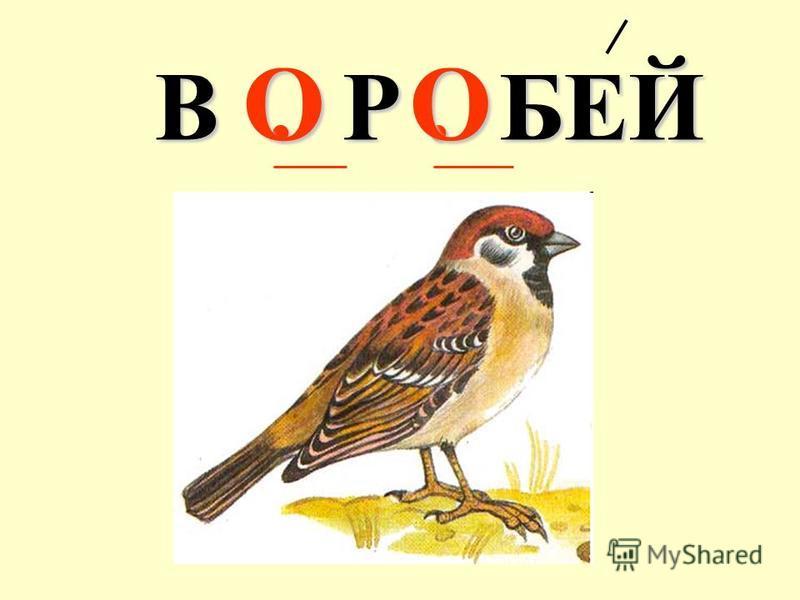 В. Р. БЕЙ ОО