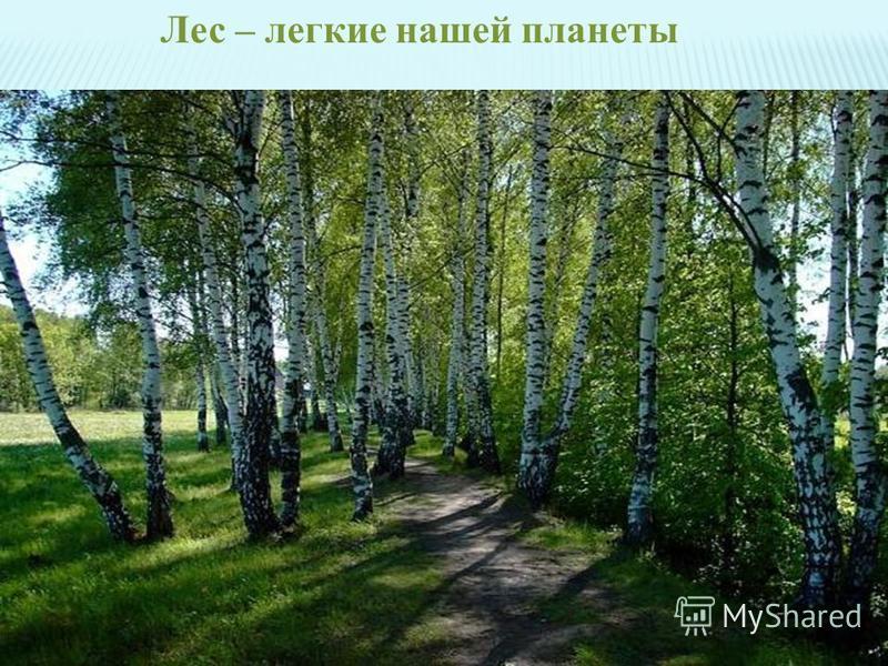 Лес – легкие нашей планеты