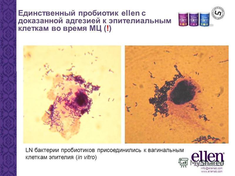 info@ellenab.com www.ellenab.com Единственный пробиотик ellen с доказанной адгезией к эпителиальным клеткам во время МЦ (!) LN бактерии пробиотиков присоединились к вагинальным клеткам эпителия (in vitro)