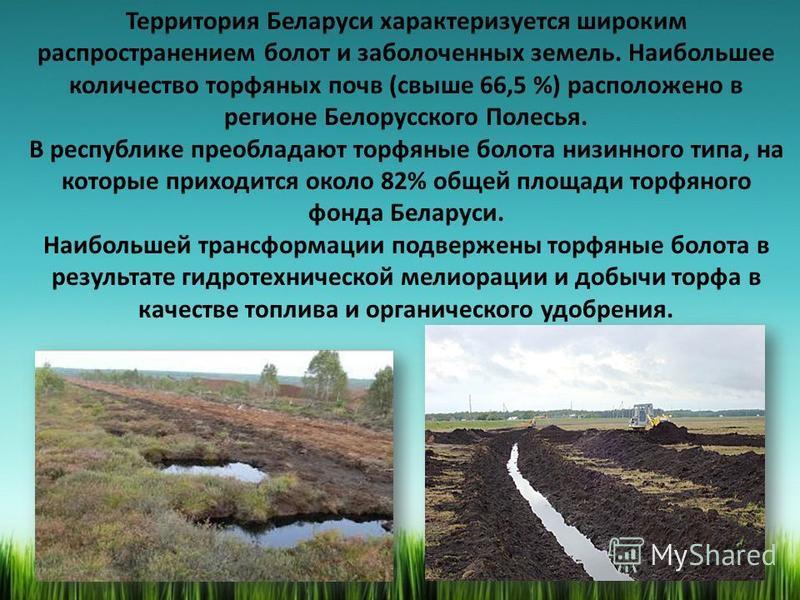 Территория Беларуси характеризуется широким распространением болот и заболоченных земель. Наибольшее количество торфяных почв (свыше 66,5 %) расположено в регионе Белорусского Полесья. В республике преобладают торфяные болота низинного типа, на котор