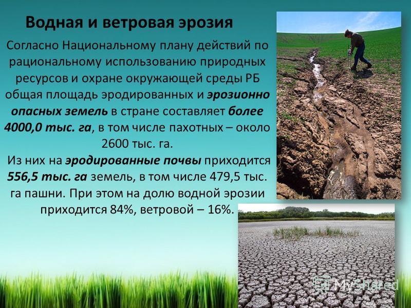 Водная и ветровая эрозия Согласно Национальному плану действий по рациональному использованию природных ресурсов и охране окружающей среды РБ общая площадь эродированных и эрозионно опасных земель в стране составляет более 4000,0 тыс. га, в том числе