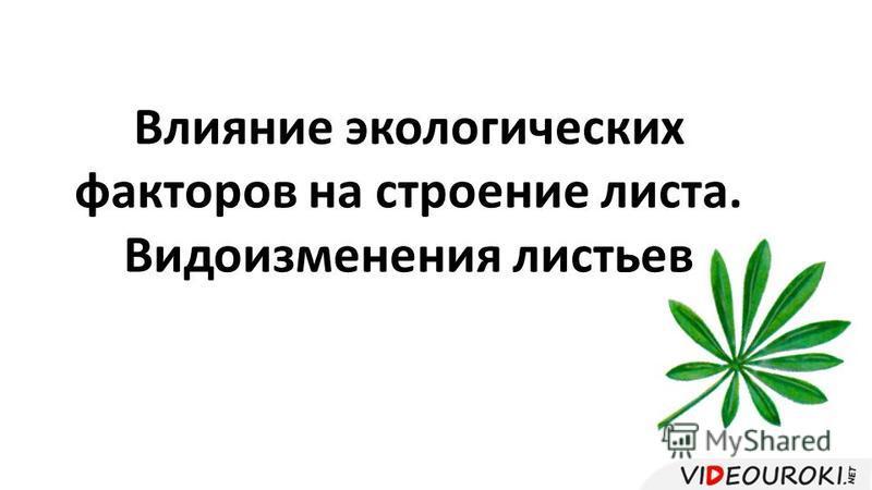 Влияние экологических факторов на строение листа. Видоизменения листьев
