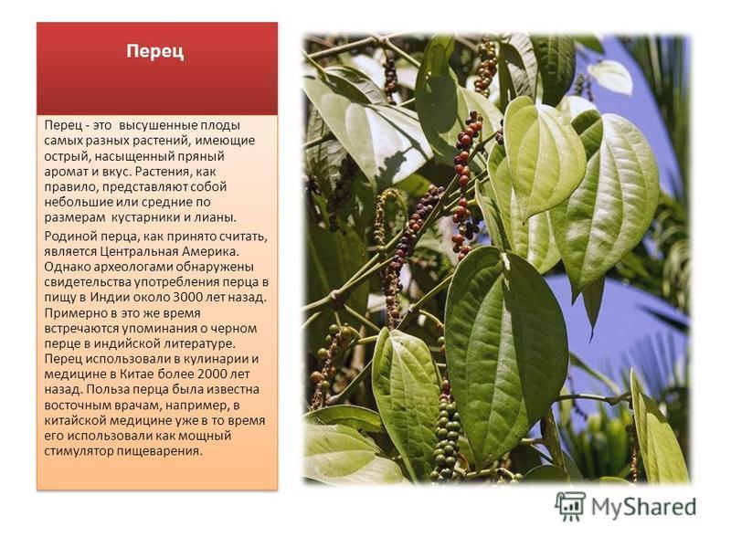 Перец Перец - это высушенные плоды самых разных растений, имеющие острый, насыщенный пряный аромат и вкус. Растения, как правило, представляют собой небольшие или средние по размерам кустарники и лианы. Родиной перца, как принято считать, является Це