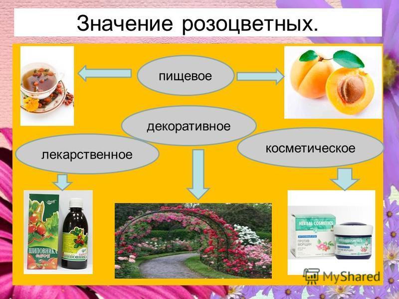 Значение розоцветных. пищевое декоративное косметическое лекарственное