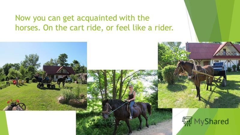 Now you can get acquainted with the horses. On the cart ride, or feel like a rider.