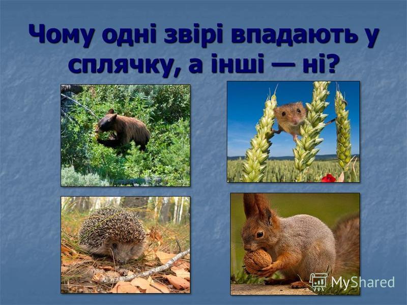 Чому одні звірі впадають у сплячку, а інші ні?