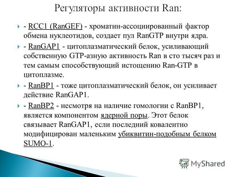 - RCC1 (RanGEF) - хроматин-ассоциированный фактор обмена нуклеотидов, создает пул RanGTP внутри ядра. - RanGAP1 - цитоплазматический белок, усиливающий собственную GTP-разную активность Ran в сто тысяч раз и тем самым способствующий истощению Ran-GTP