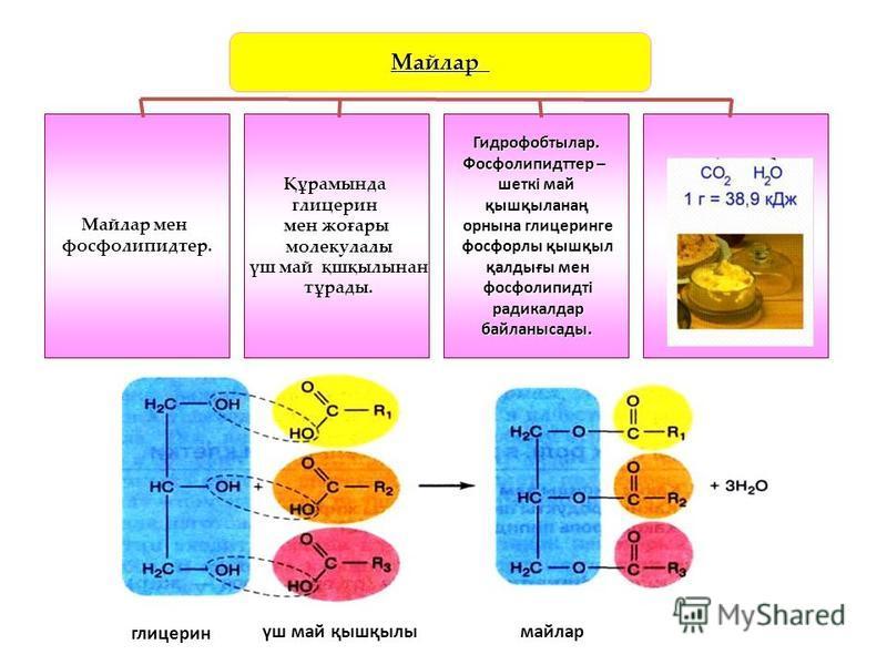 Майлар Майлар мен фосфолипидтер.Құрамындаглицерин мен жоғары молекулалы молекулалы үш май қшқылынан үш май қшқылынан тұрады. тұрады.Гидрофобтылар. Фосфолипидттер – шеткі май қышқыланаң қышқыланаң орнына глицеринге орнына глицеринге фосфорлы қышқыл фо