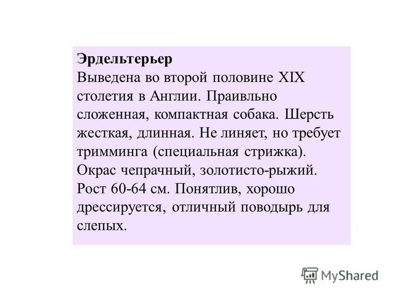 ЭРДЕЛЬТЕРЬЕР