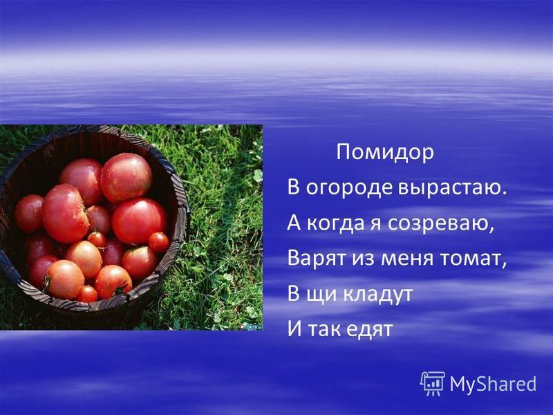 Помидор В огороде вырастаю. А когда я созреваю, Варят из меня томат, В щи кладут И так едят