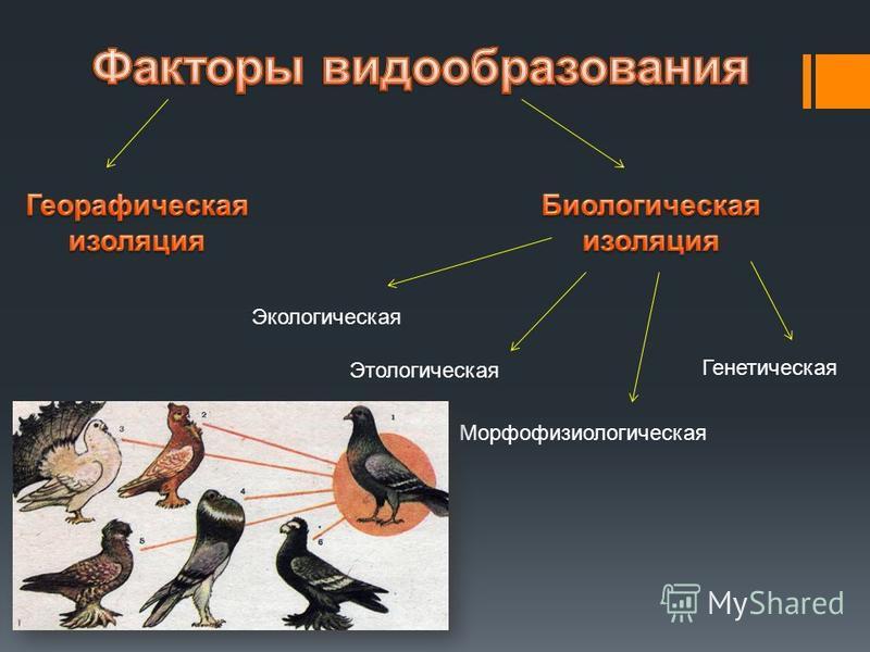 Экологическая Этологическая Морфофизиологическая Генетическая