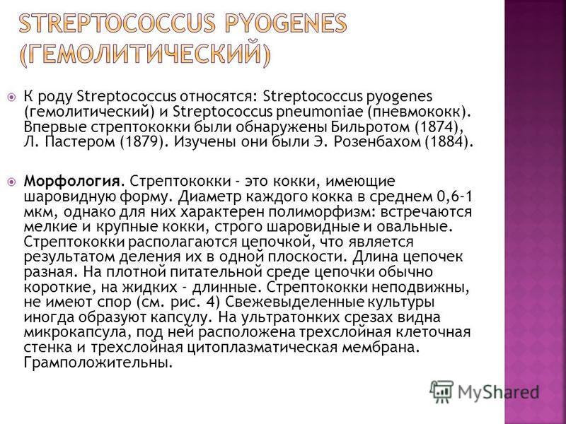 К роду Streptococcus относятся: Streptococcus pyogenes (гемолитический) и Streptococcus pneumoniae (пневмококк). Впервые стрептококки были обнаружены Бильротом (1874), Л. Пастером (1879). Изучены они были Э. Розенбахом (1884). Морфология. Стрептококк