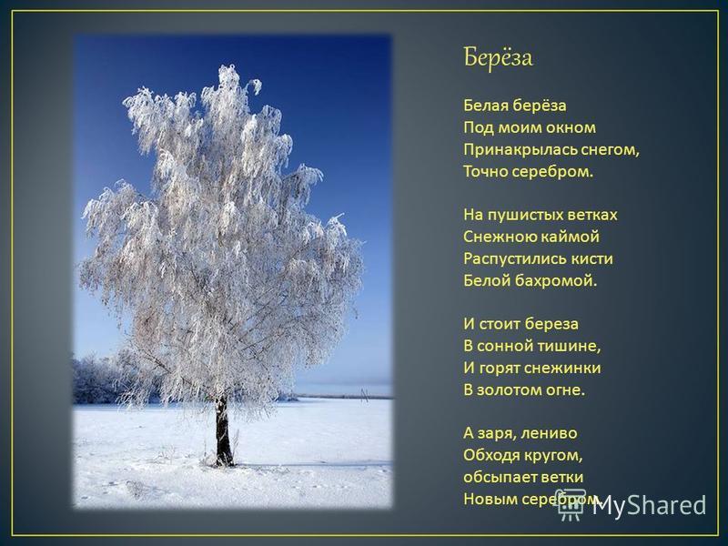 Берёза Белая берёза Под моим окном Принакрылась снегом, Точно серебром. На пушистых ветках Снежною каймой Распустились кисти Белой бахромой. И стоит береза В сонной тишине, И горят снежинки В золотом огне. А заря, лениво Обходя кругом, обсыпает ветки