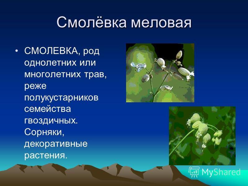 Смолёвка меловая СМОЛЕВКА, род однолетних или многолетних трав, реже полукустарников семейства гвоздичных. Сорняки, декоративные растения.