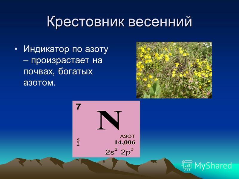 Крестовник весенний Индикатор по азоту – произрастает на почвах, богатых азотом.