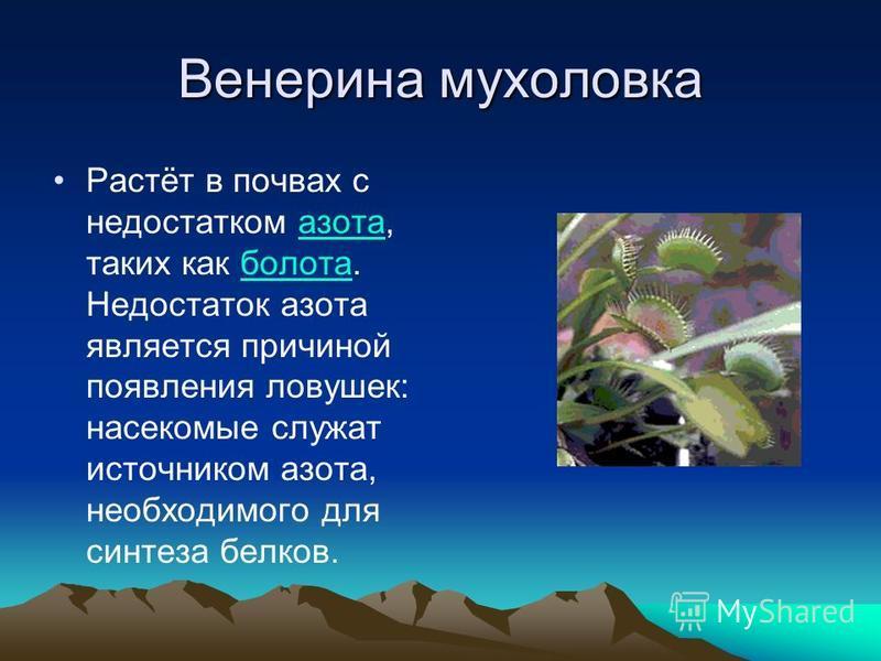 Венерина мухоловка Растёт в почвах с недостатком азота, таких как болота. Недостаток азота является причиной появления ловушек: насекомые служат источником азота, необходимого для синтеза белков.азота болота